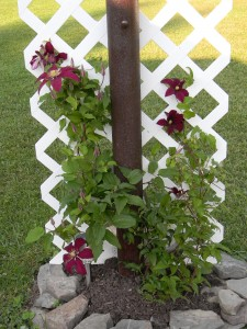 My Mobile Home Makeover Clematis